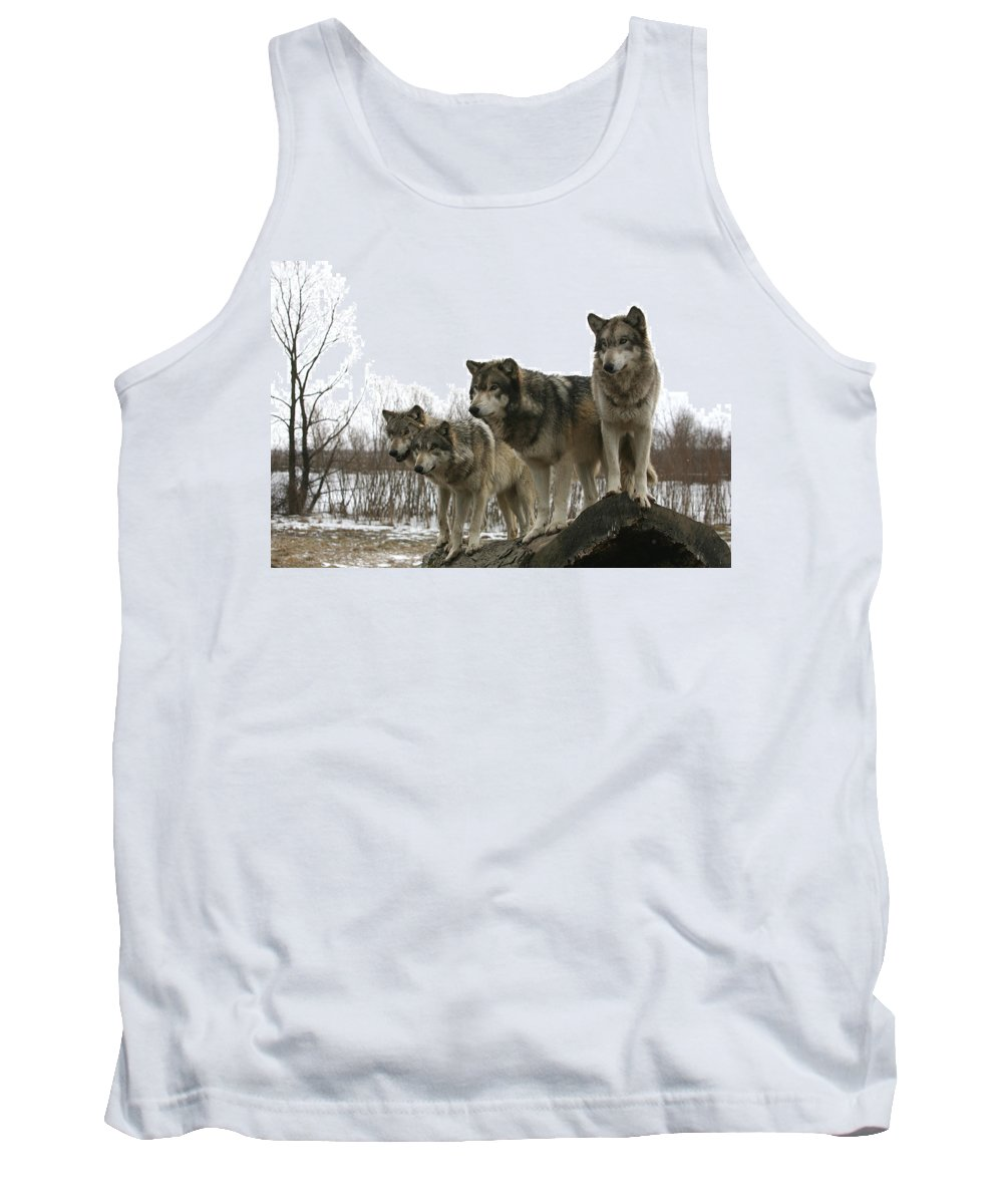 Wolf Wolves Mammals Animals Photography Photograph Winter Wolf Tank Top featuring the photograph Four Pack by Shari Jardina