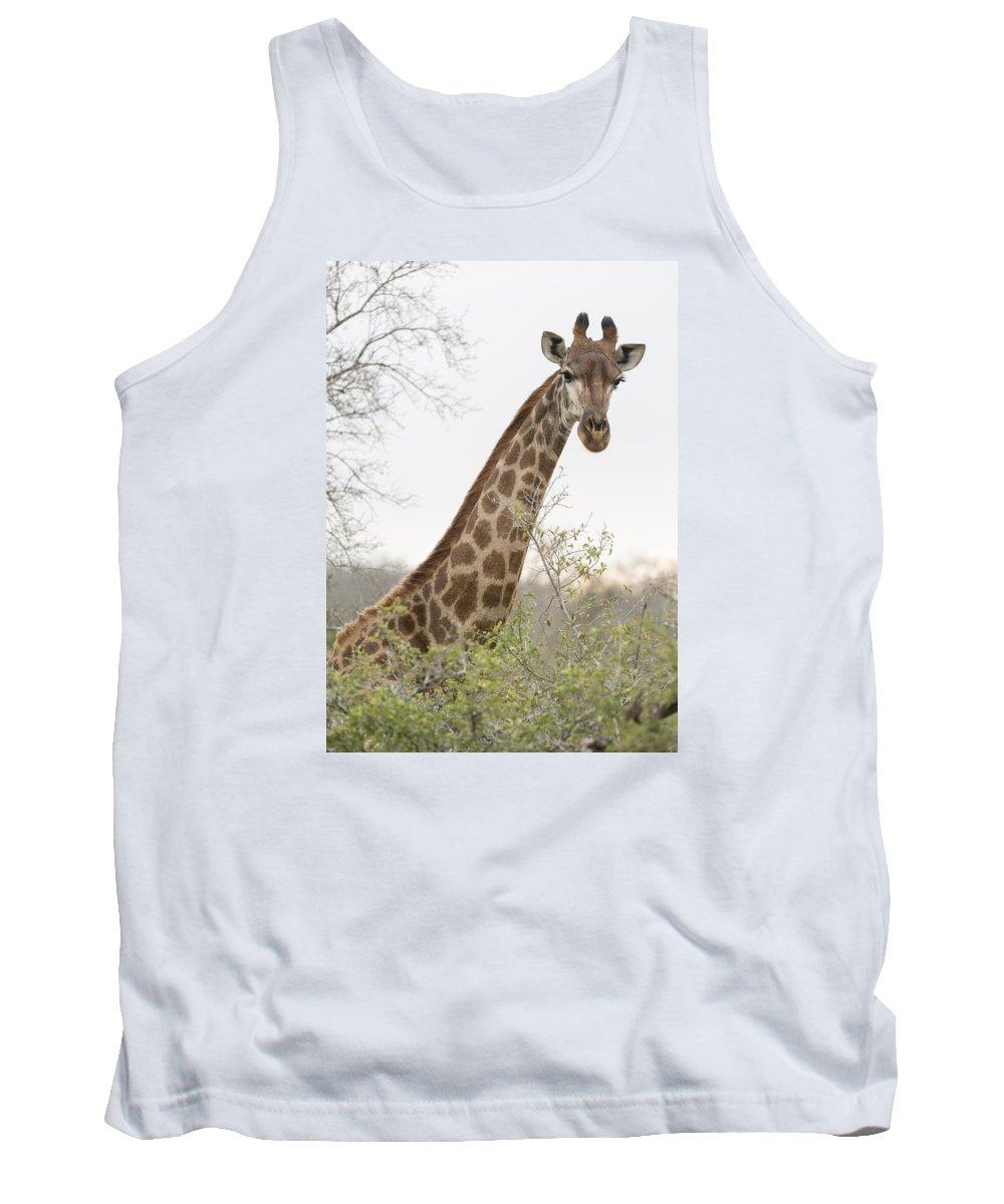 Giraffe Tank Top featuring the photograph Giraffe by Stephen Stookey