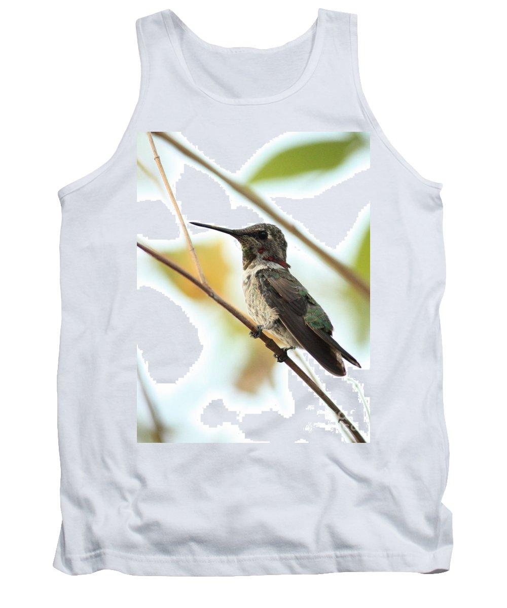 Hummingbird Tank Top featuring the photograph Hummingbird Between Branches by Carol Groenen