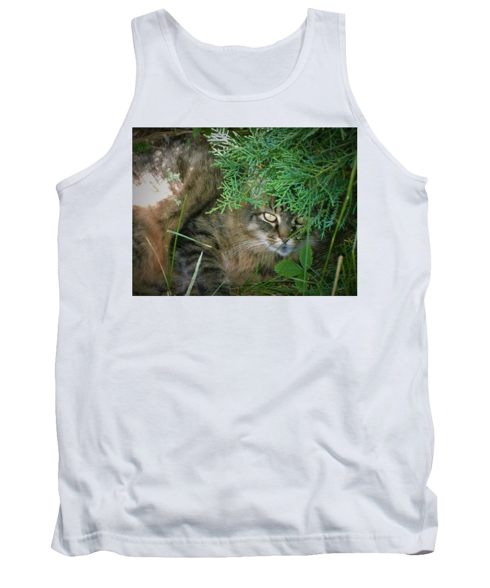 Maine Tank Top featuring the photograph Maine Coon by Amanda Johnson