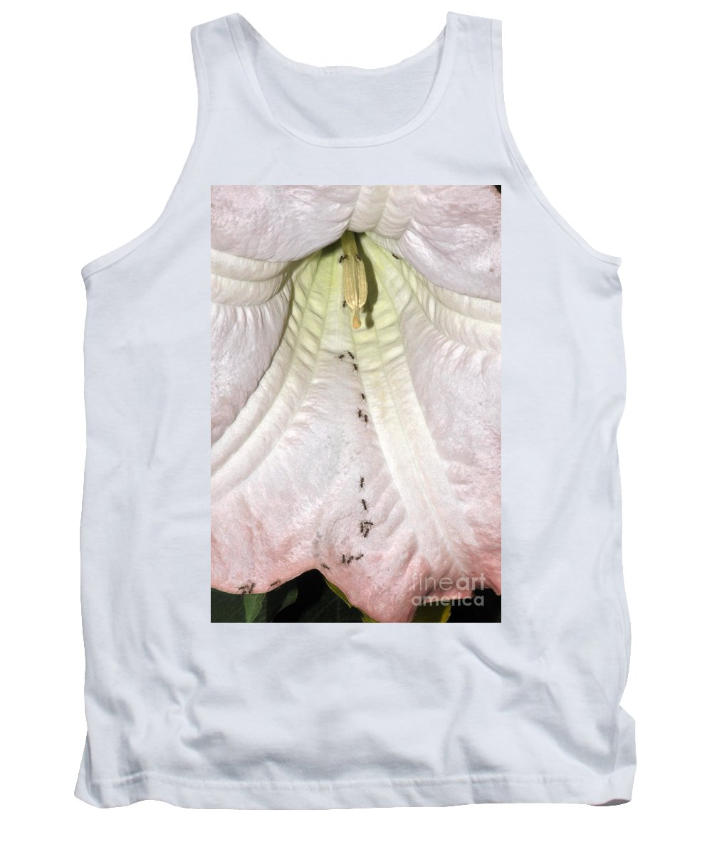 Clay Tank Top featuring the photograph Marching Ants by Clayton Bruster