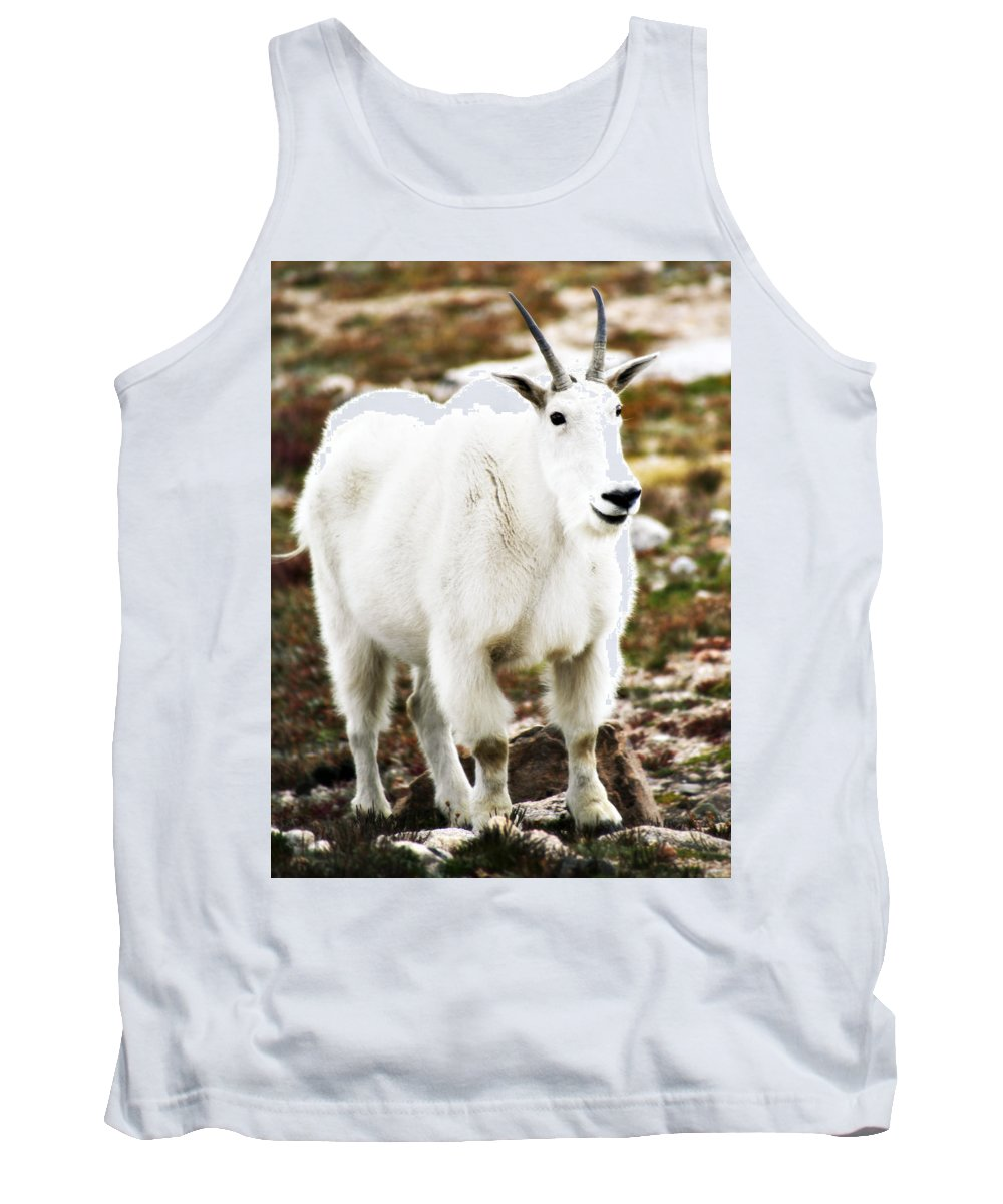 Animal Tank Top featuring the photograph Mountain Goat by Marilyn Hunt