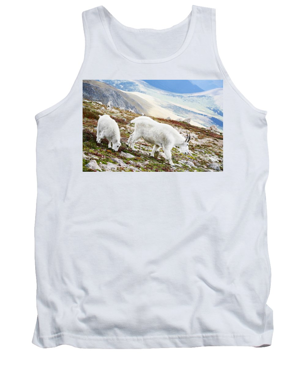 Mountain Tank Top featuring the photograph Mountain Goats 1 by Marilyn Hunt