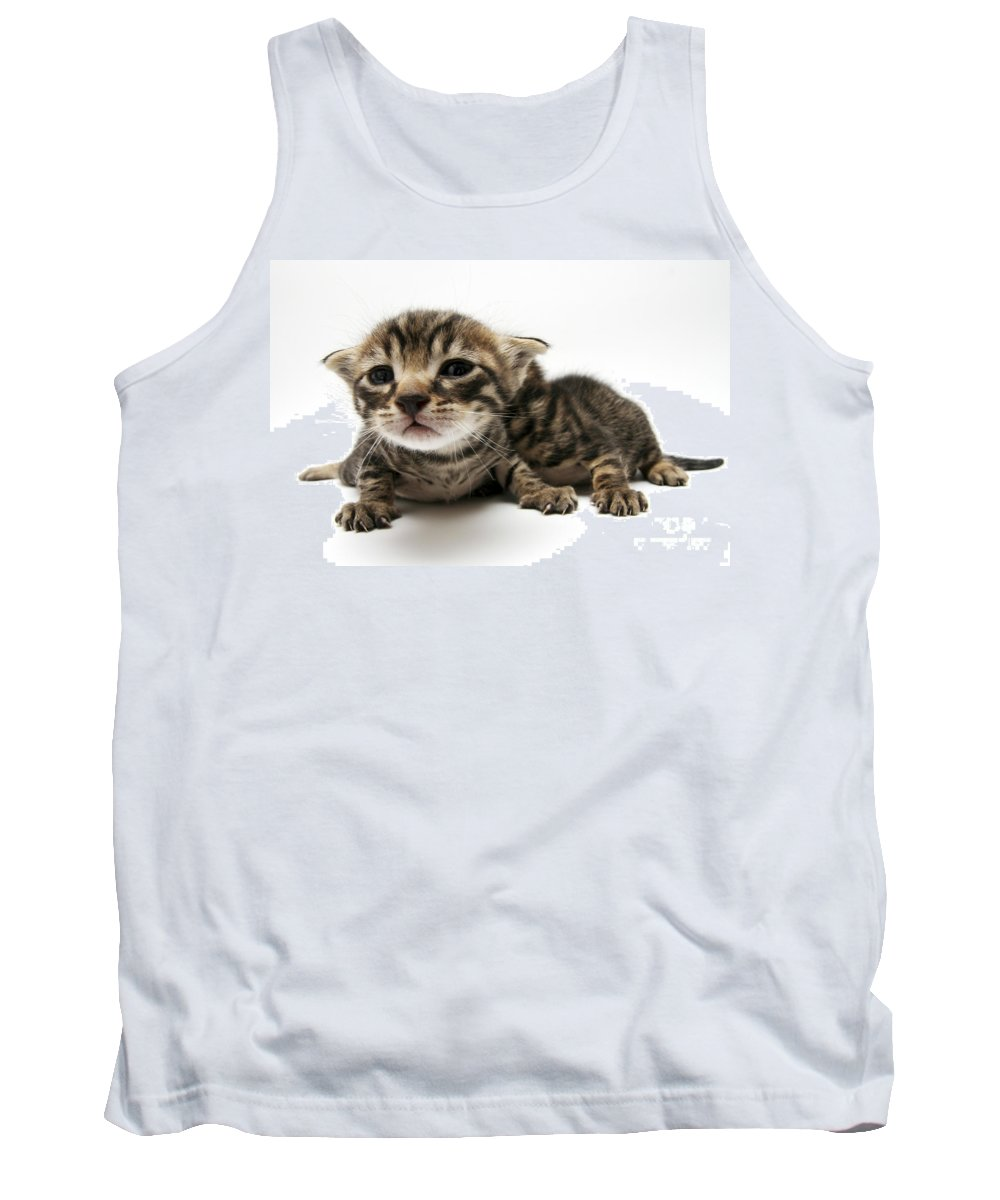 Cat Tank Top featuring the photograph One Week Old Kittens by Yedidya yos mizrachi