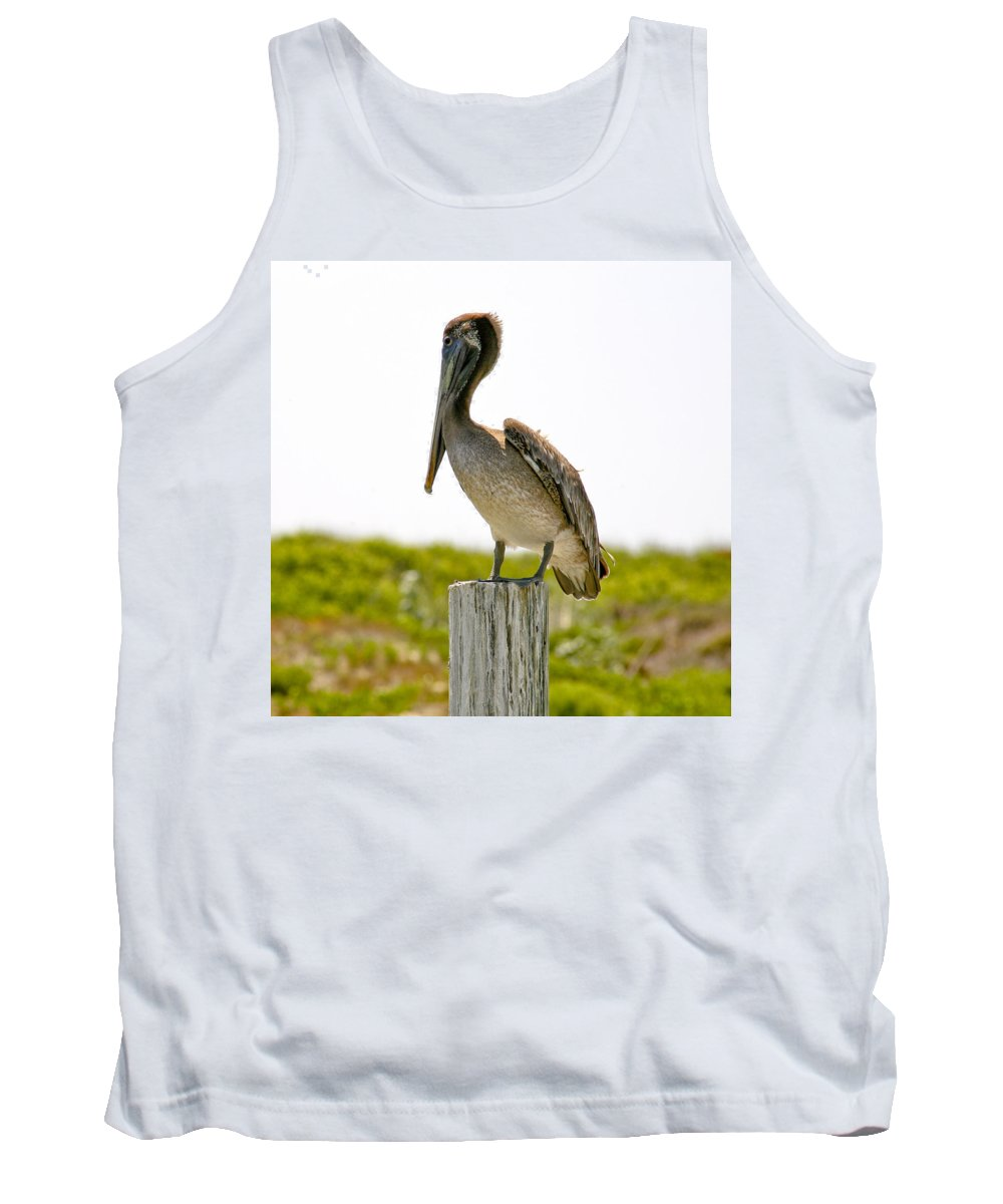 Pelican Tank Top featuring the photograph Pretty Pelican by Marilyn Hunt