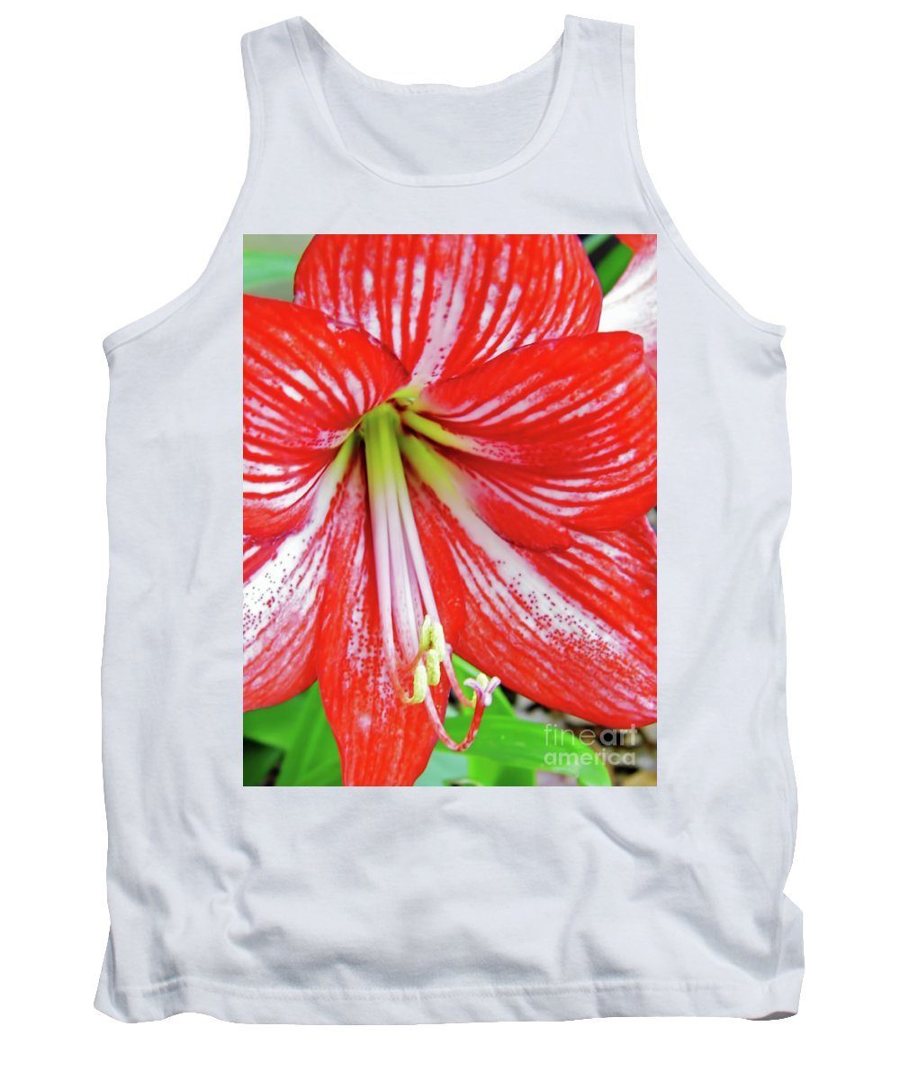 Amaryllis Tank Top featuring the photograph Red And White Beauty by D Hackett