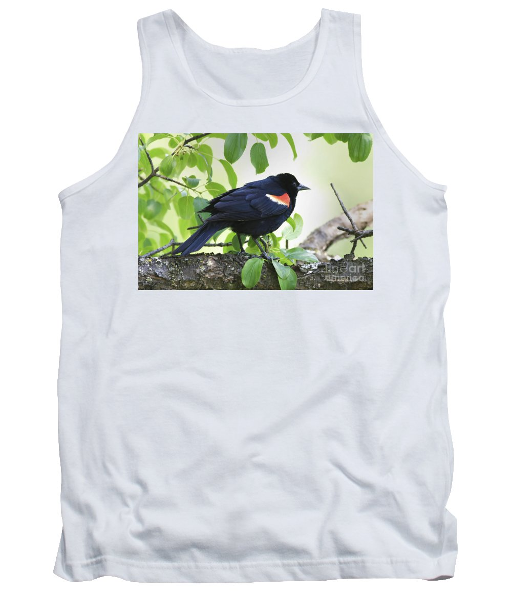 Bird Tank Top featuring the photograph Red Winged In Montreal by Deborah Benoit