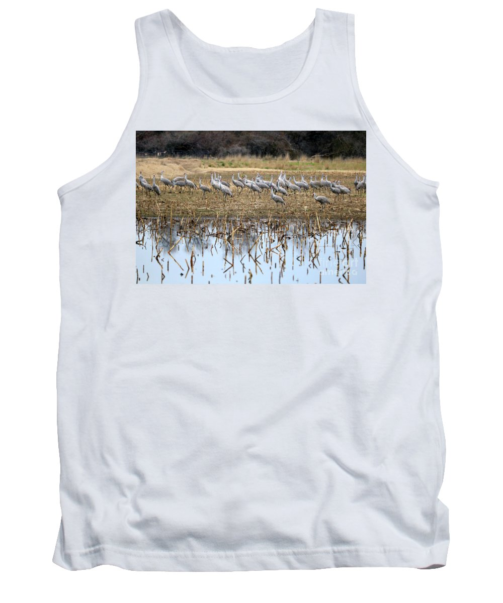 Sandhill Cranes Tank Top featuring the photograph Sandhill Herd By Pond by Carol Groenen