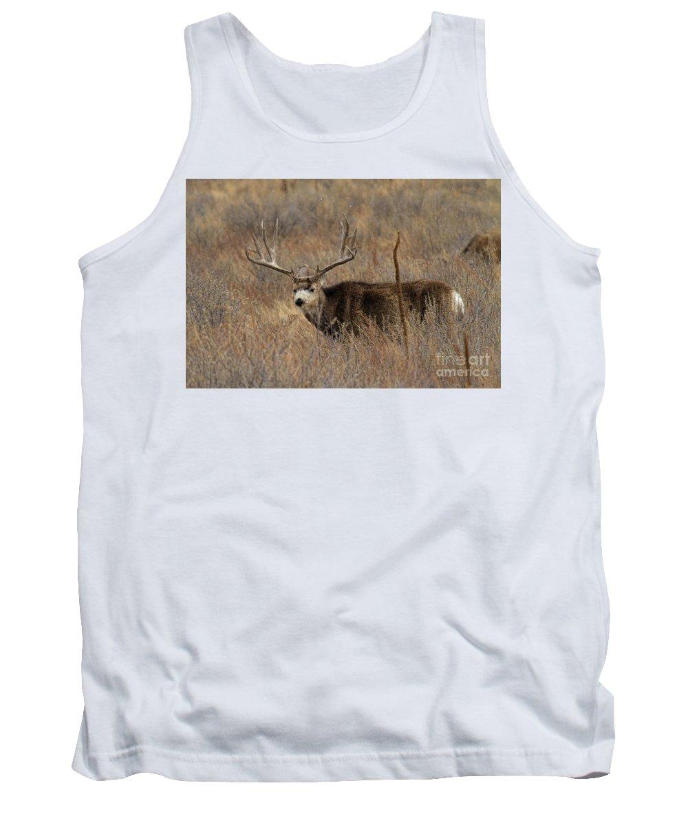 Mule Deer. Mule Deer Buck Tank Top featuring the photograph Snow Showers by Jim Garrison