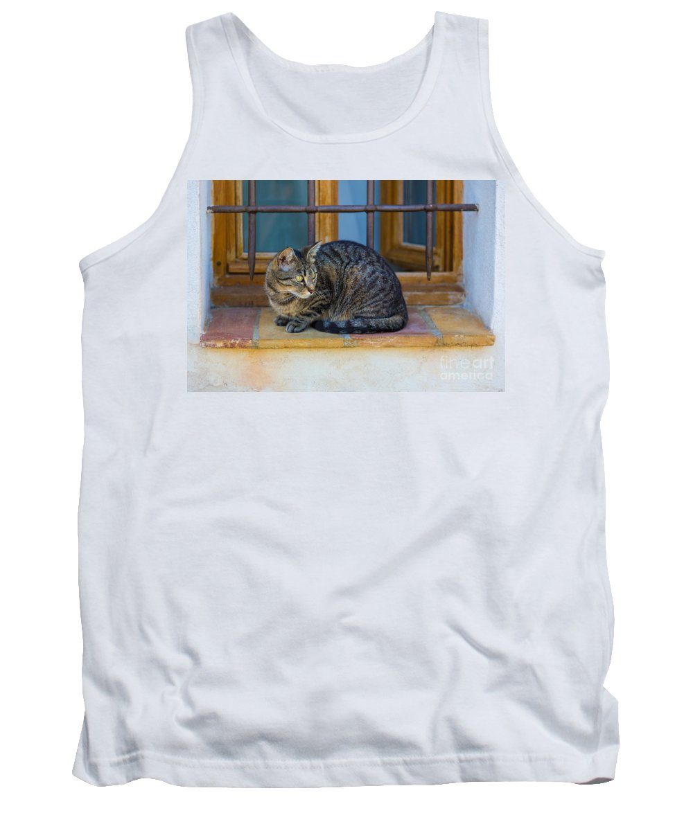 Alpes-maritimes Tank Top featuring the photograph St Paul Cat by Inge Johnsson