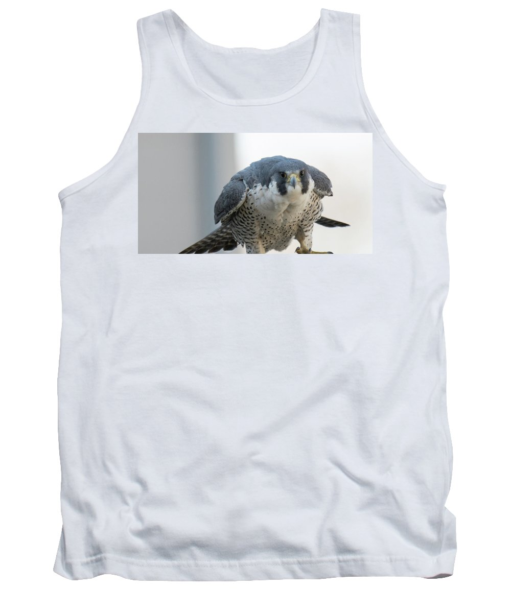 Raptor Tank Top featuring the photograph Stare Down by Judd Nathan