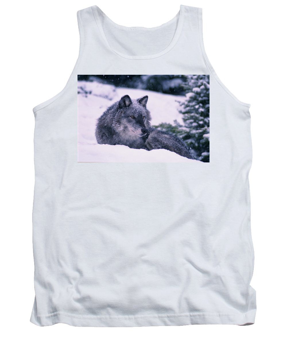 Alert Tank Top featuring the photograph T.kitchin, 19552c Gray Wolf, Winter by First Light