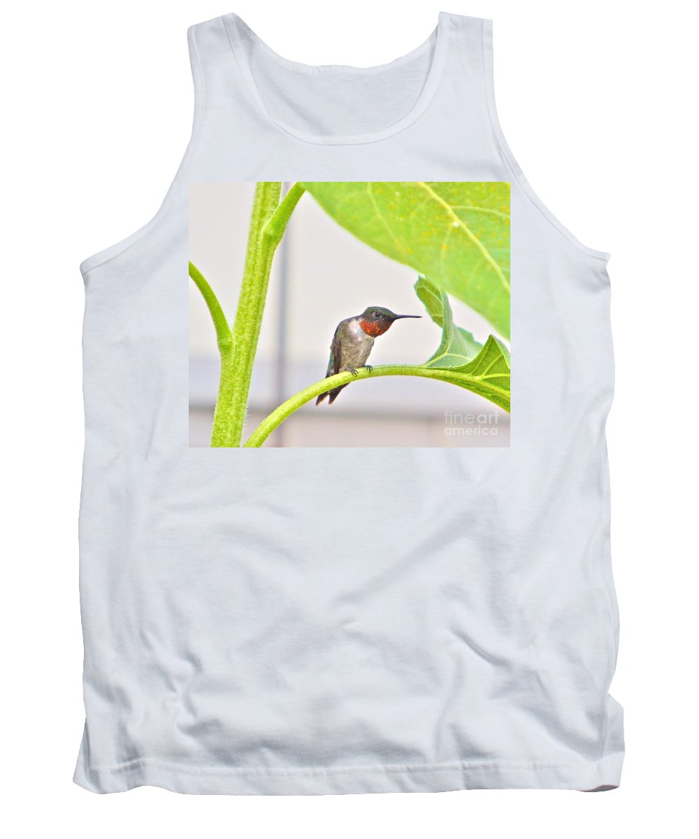 Humming Bird Tank Top featuring the photograph What by Robert Pearson