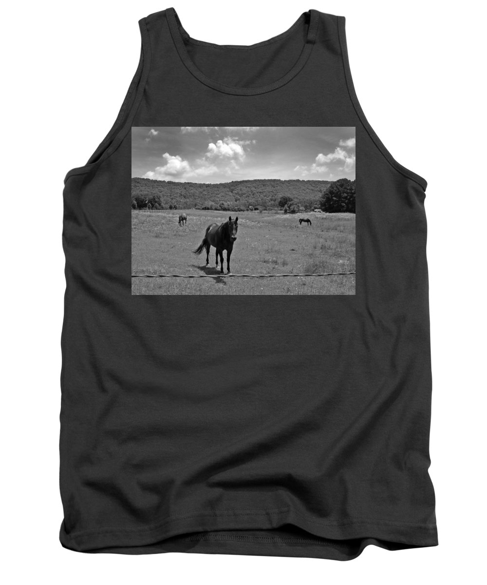 Horses Tank Top featuring the photograph Black And White Pasture With Three Horses by Anne Cameron Cutri