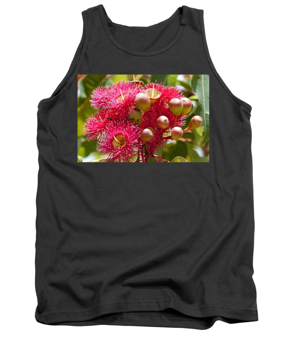 Ant Tank Top featuring the photograph Flowering Gum W Ants by Rodney Appleby