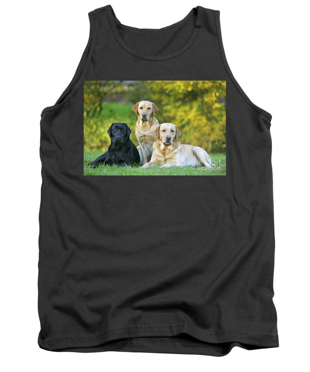 Dogs Tank Top featuring the photograph Black And Yellow Labrador Retrievers by John Daniels