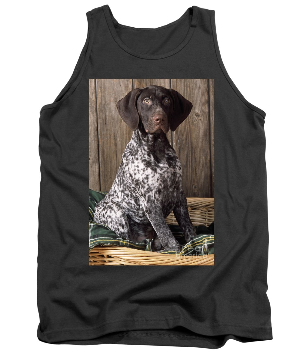 German Short-haired Pointer Tank Top featuring the photograph German Short-haired Pointer Dog by John Daniels