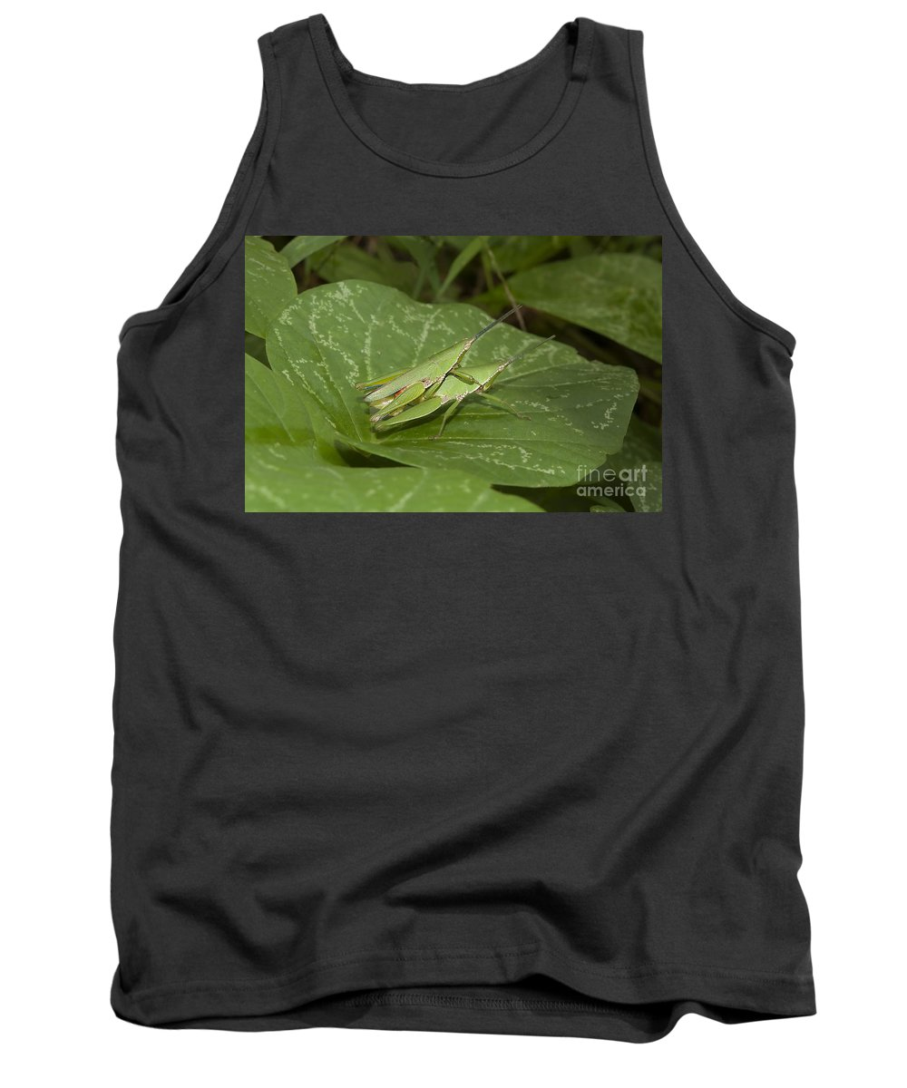 Grasshopper Tank Top featuring the photograph Grasshopper Mating On Grass Leaf by Rudra Narayan Mitra