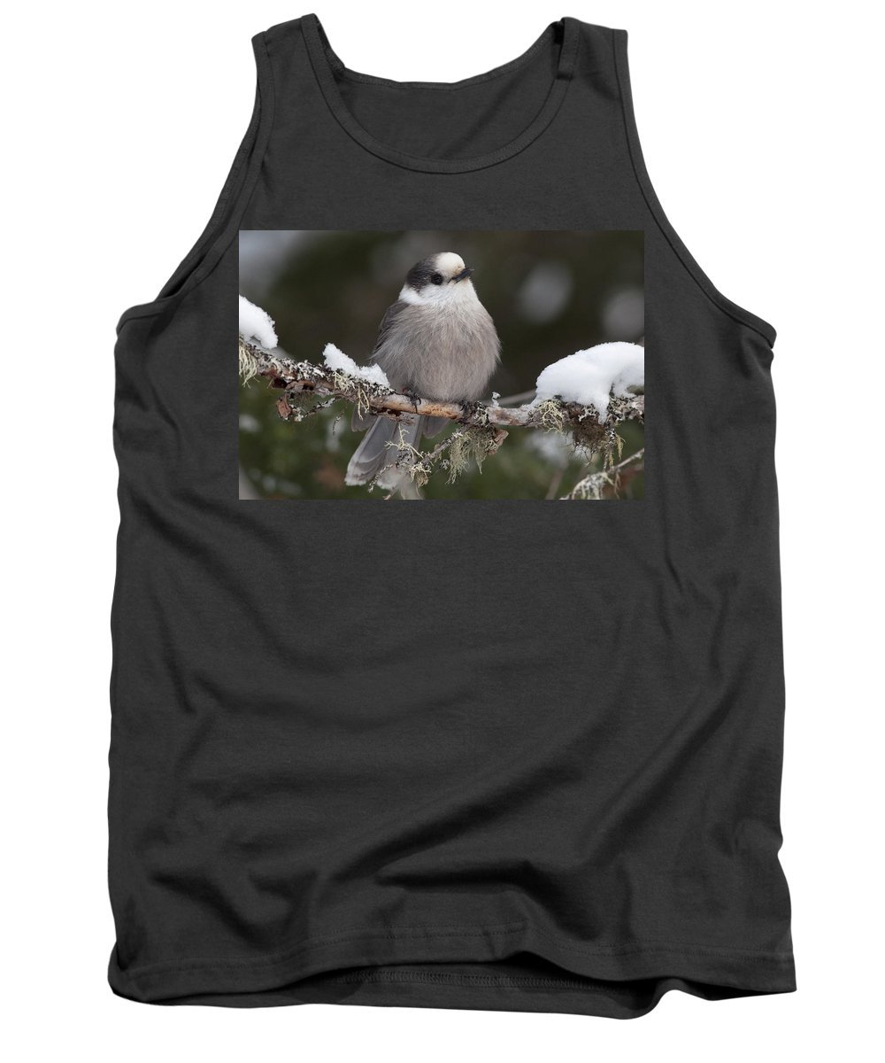 Grey Tank Top featuring the photograph Grey Jay by Richard Kitchen
