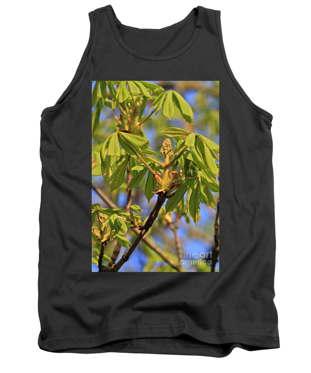 Chestnut Tank Top featuring the photograph Horse Chestnut by Dan Radi