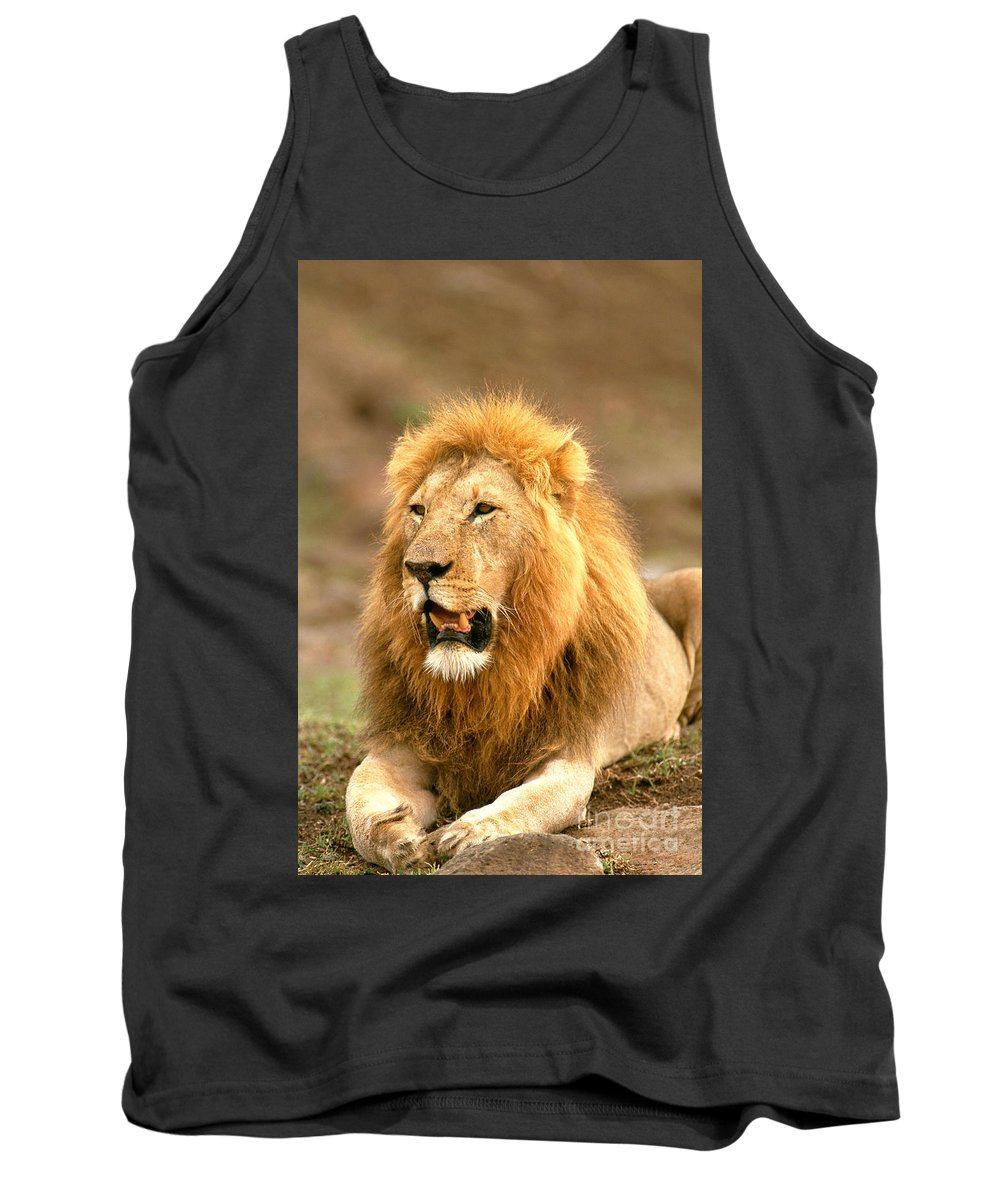 Lion Tank Top featuring the photograph Male Lion by David Davis