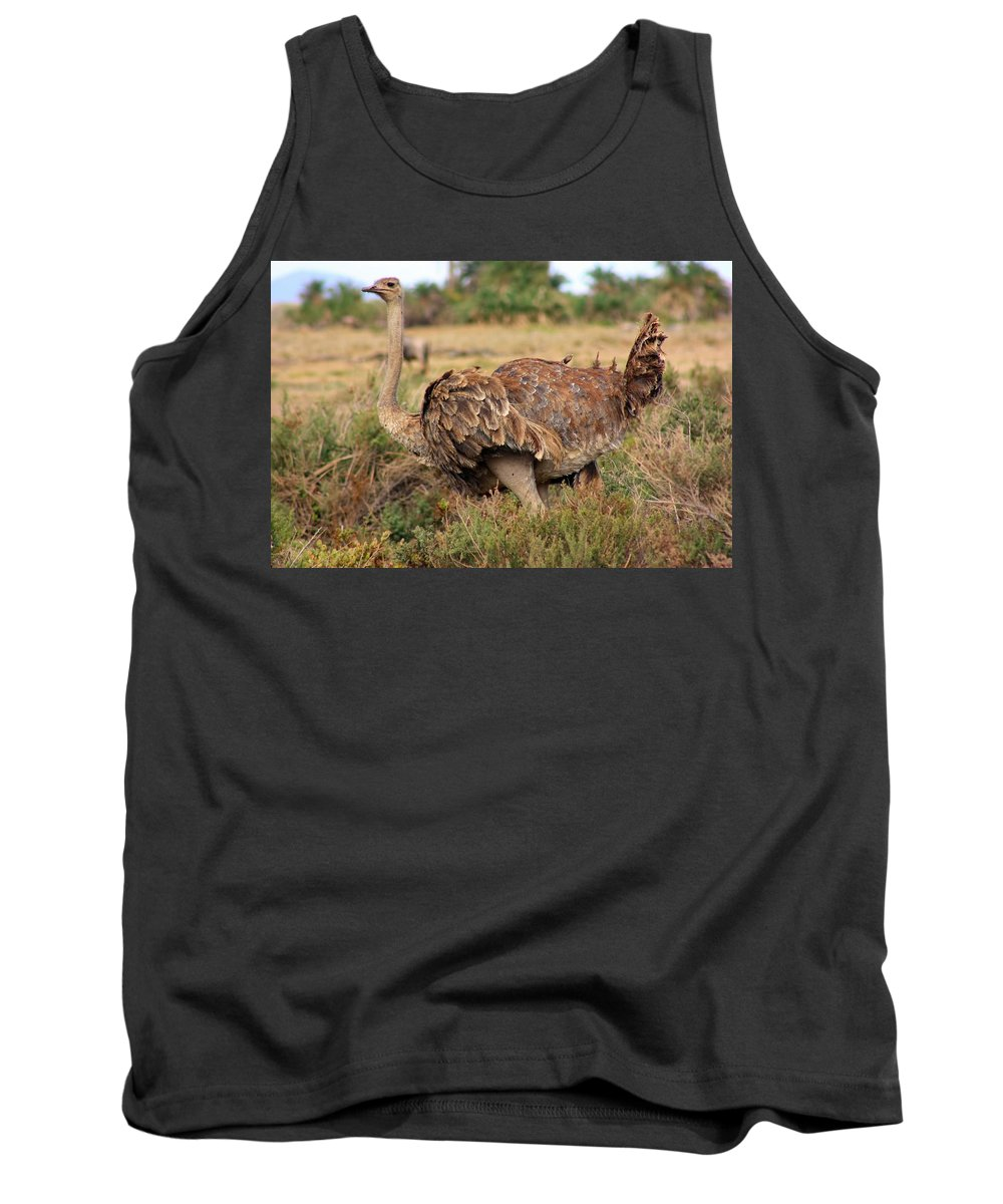 Ostrich Tank Top featuring the photograph Ostrich by Amanda Stadther
