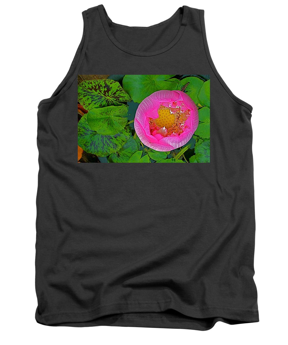 Pink Lotus In Backyard Of Home In Bangkok Tank Top featuring the photograph Pink Lotus In Backyard Of Home In Bangkok-thailand. by Ruth Hager