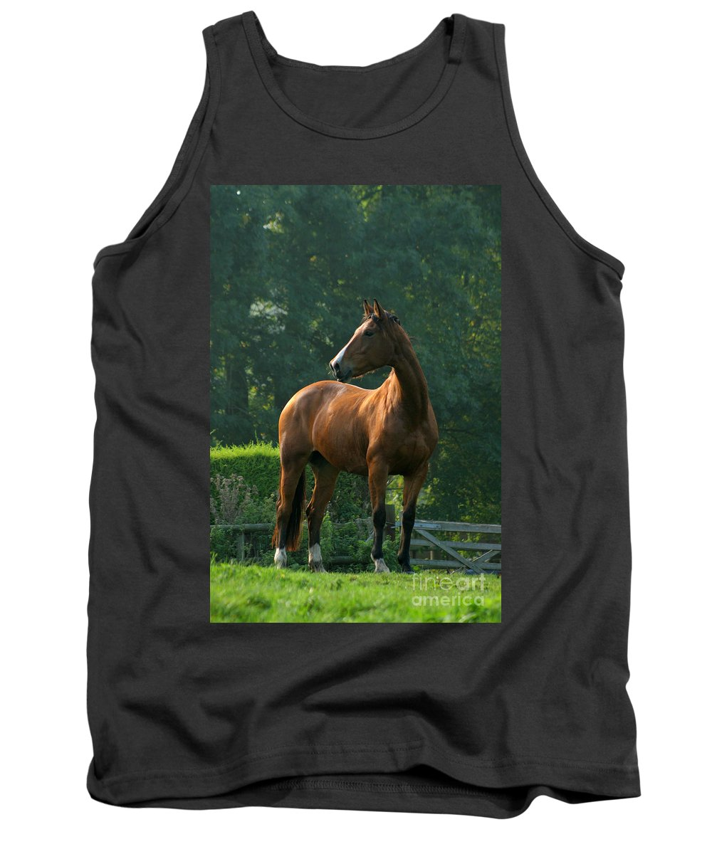 Horse Tank Top featuring the photograph Sentinel by Angel Ciesniarska