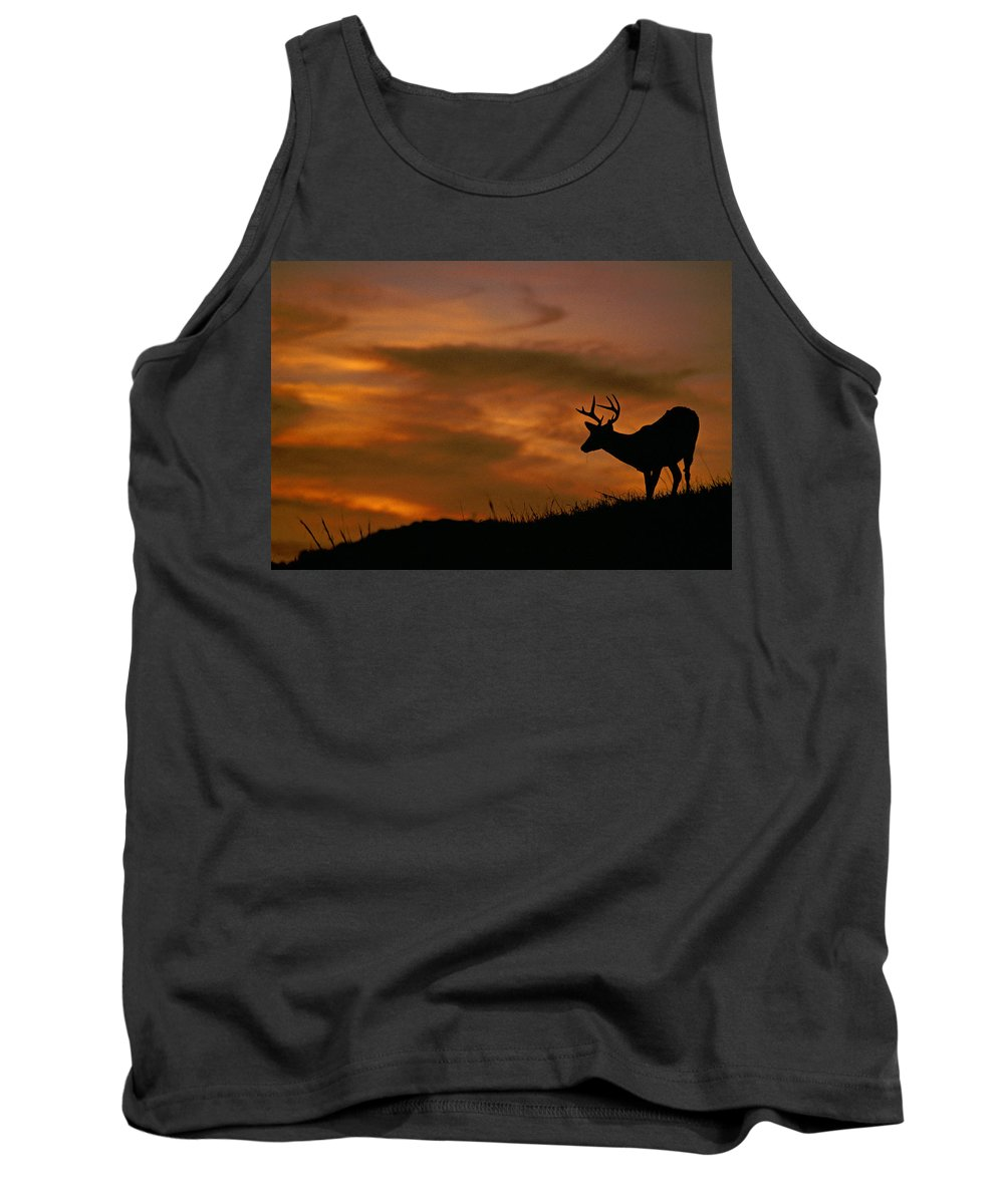 Deer Tank Top featuring the photograph Sunset Buck by Eric Albright
