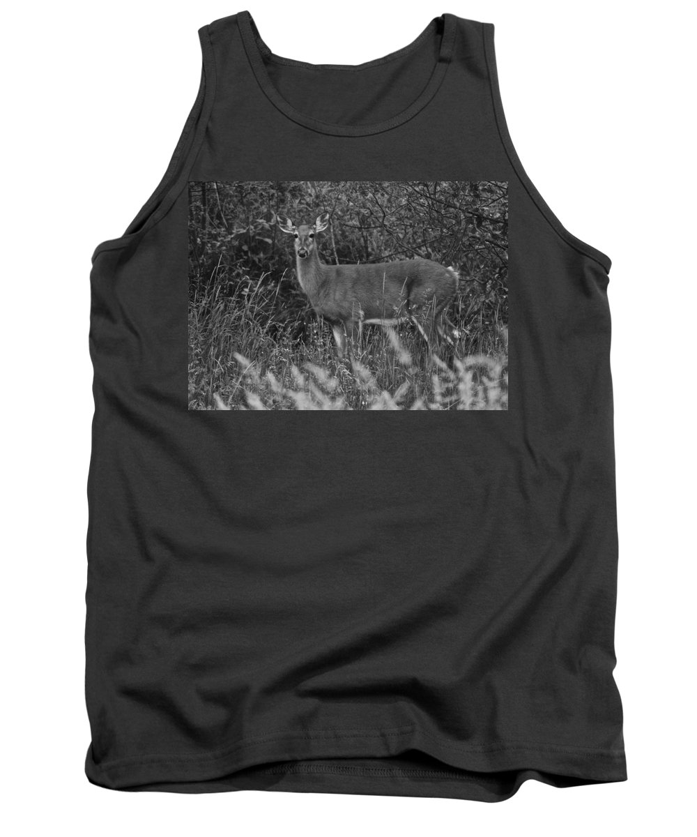 Deer Tank Top featuring the photograph Well Hello There by Frozen in Time Fine Art Photography