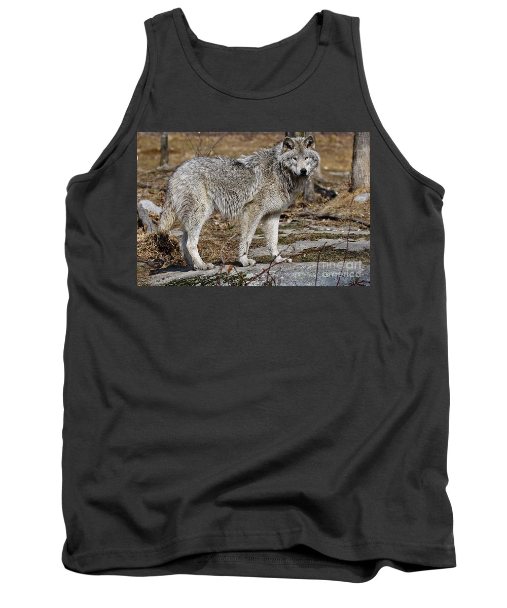 Timber Wolf Photography Tank Top featuring the photograph Timber Wolf by Wolves Only