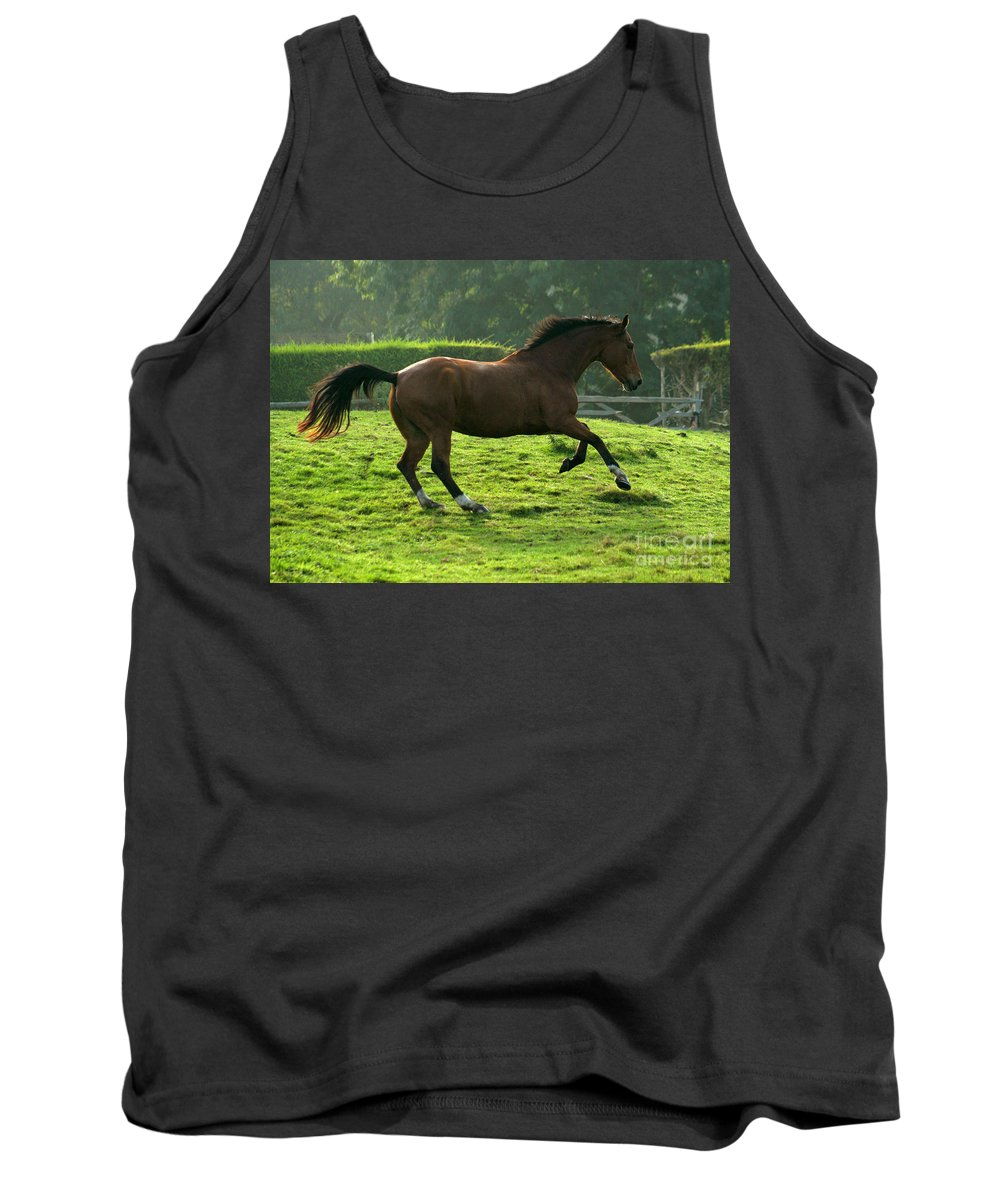 Grey Horse Tank Top featuring the photograph The Bay Horse by Angel Ciesniarska