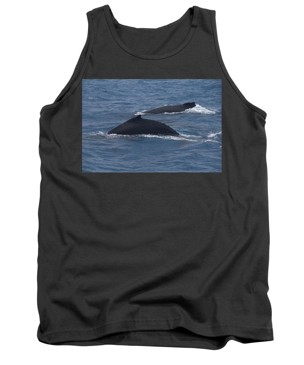 Australia Queensland Qld Tank Top featuring the digital art Humpback Whales by Carol Ailles
