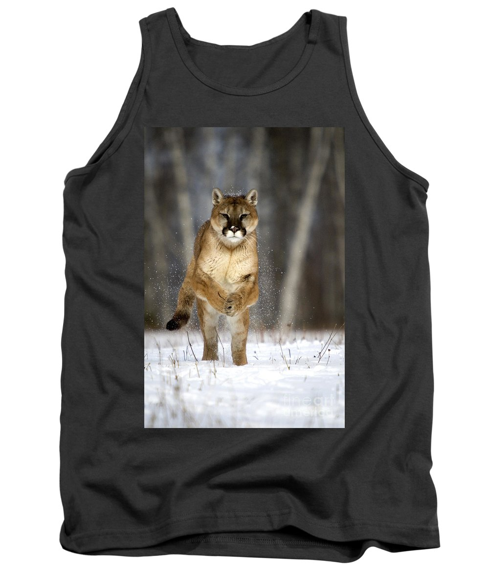 Felis Concolor Tank Top featuring the photograph Cougar by Linda Freshwaters Arndt