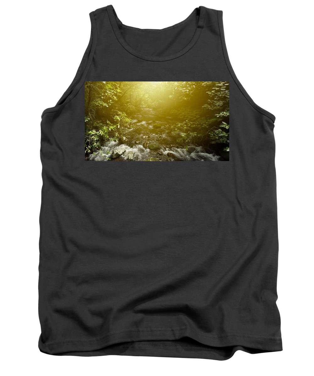 New Zealand Tank Top featuring the photograph Forest Light by Les Cunliffe