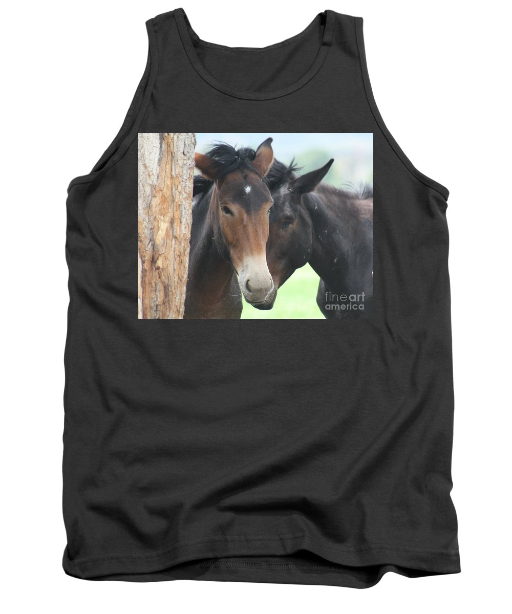 Horses Tank Top featuring the photograph Buddies by Brandi Maher