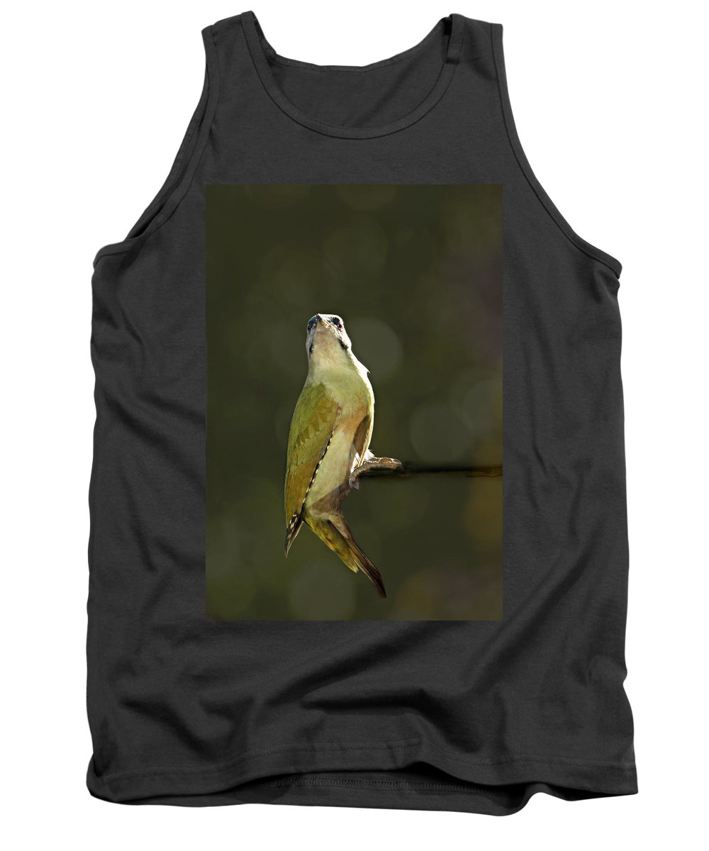 Animal Black Woodpecker Tank Top featuring the photograph Grey-headed Woodpecker by Heike Hultsch