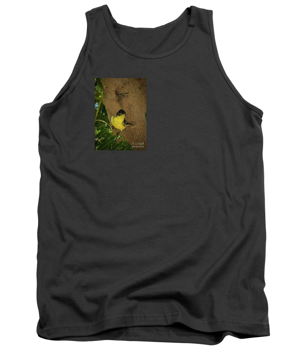 Yellow Tank Top featuring the photograph Lesser Goldfinch by Robert Bales