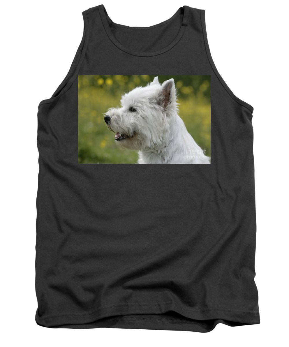 West Highland White Terrier Tank Top featuring the photograph West Highland White Terrier by Rolf Kopfle
