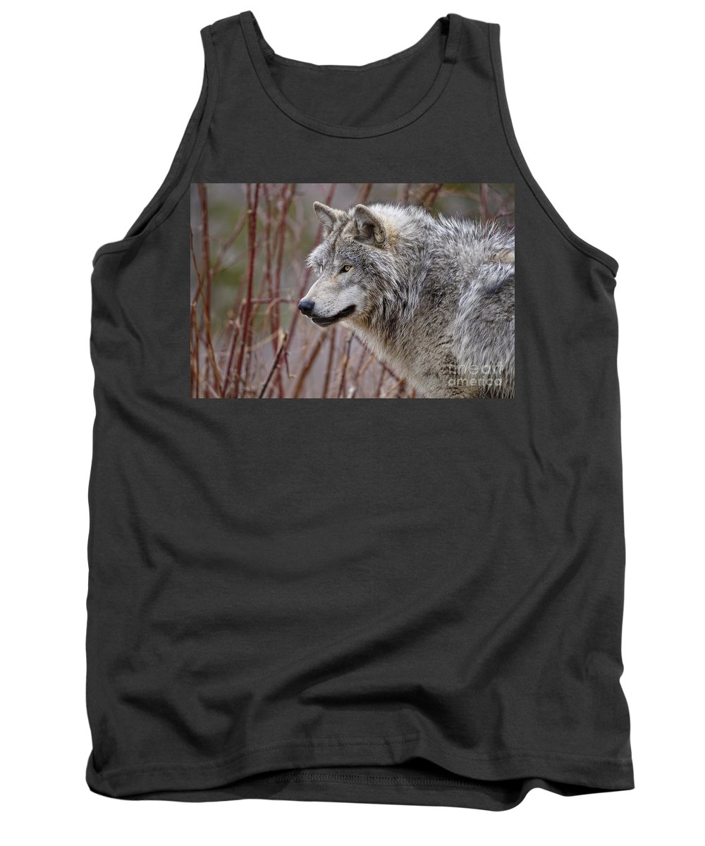 Timber Wolf Photography Tank Top featuring the photograph Timber Wolf Pictures by Wolves Only
