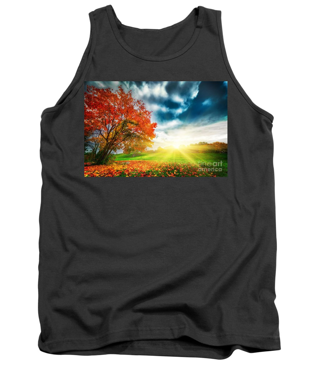 Autumn Tank Top featuring the photograph Autumn Fall Landscape In Park by Michal Bednarek