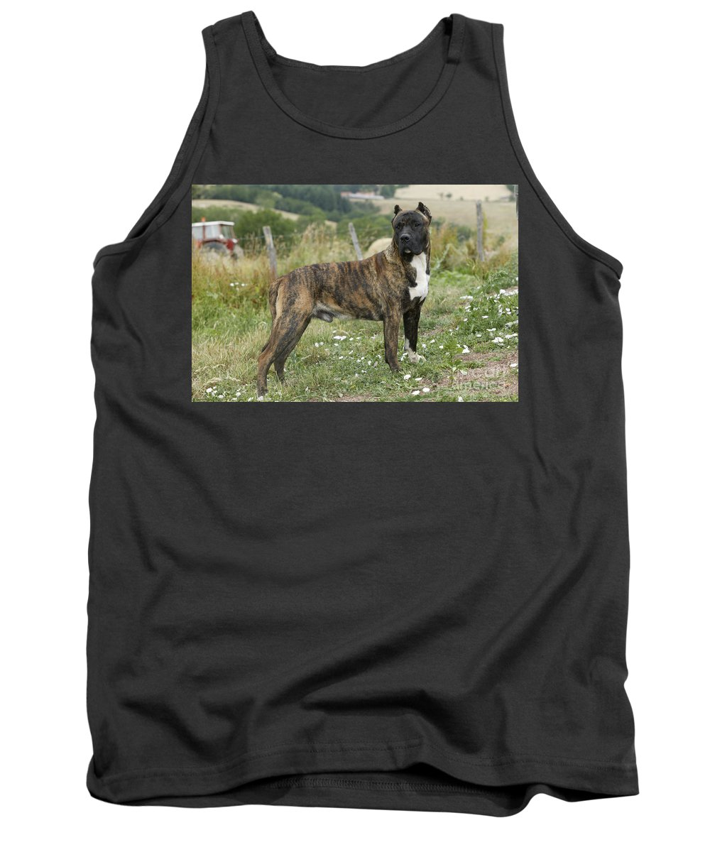 Canary Dog Tank Top featuring the photograph Canary Dog by Jean-Michel Labat