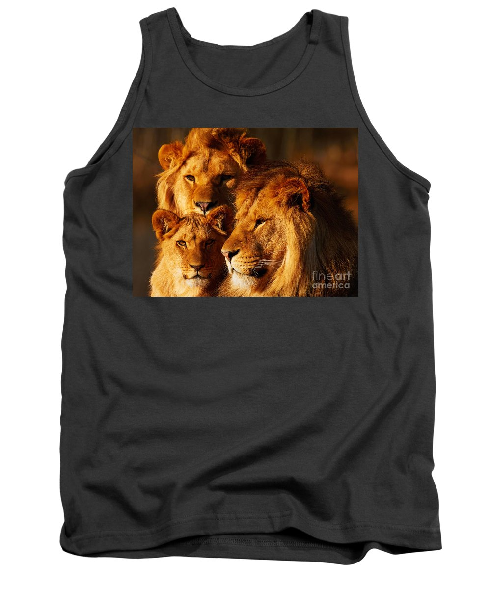 Closeup Tank Top featuring the photograph Lion Family Close Together by Nick Biemans