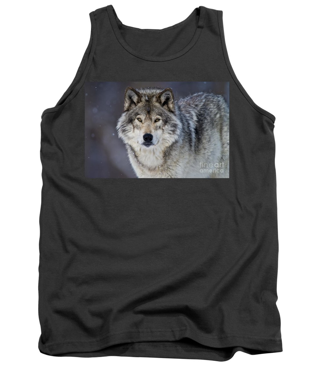 Michael Cummings Tank Top featuring the photograph Timber Wolf by Michael Cummings