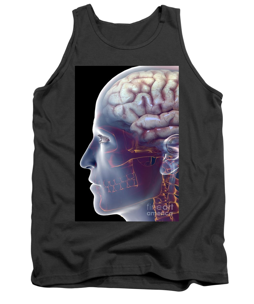 Central Sulcus Tank Top featuring the photograph Human Brain by Science Picture Co
