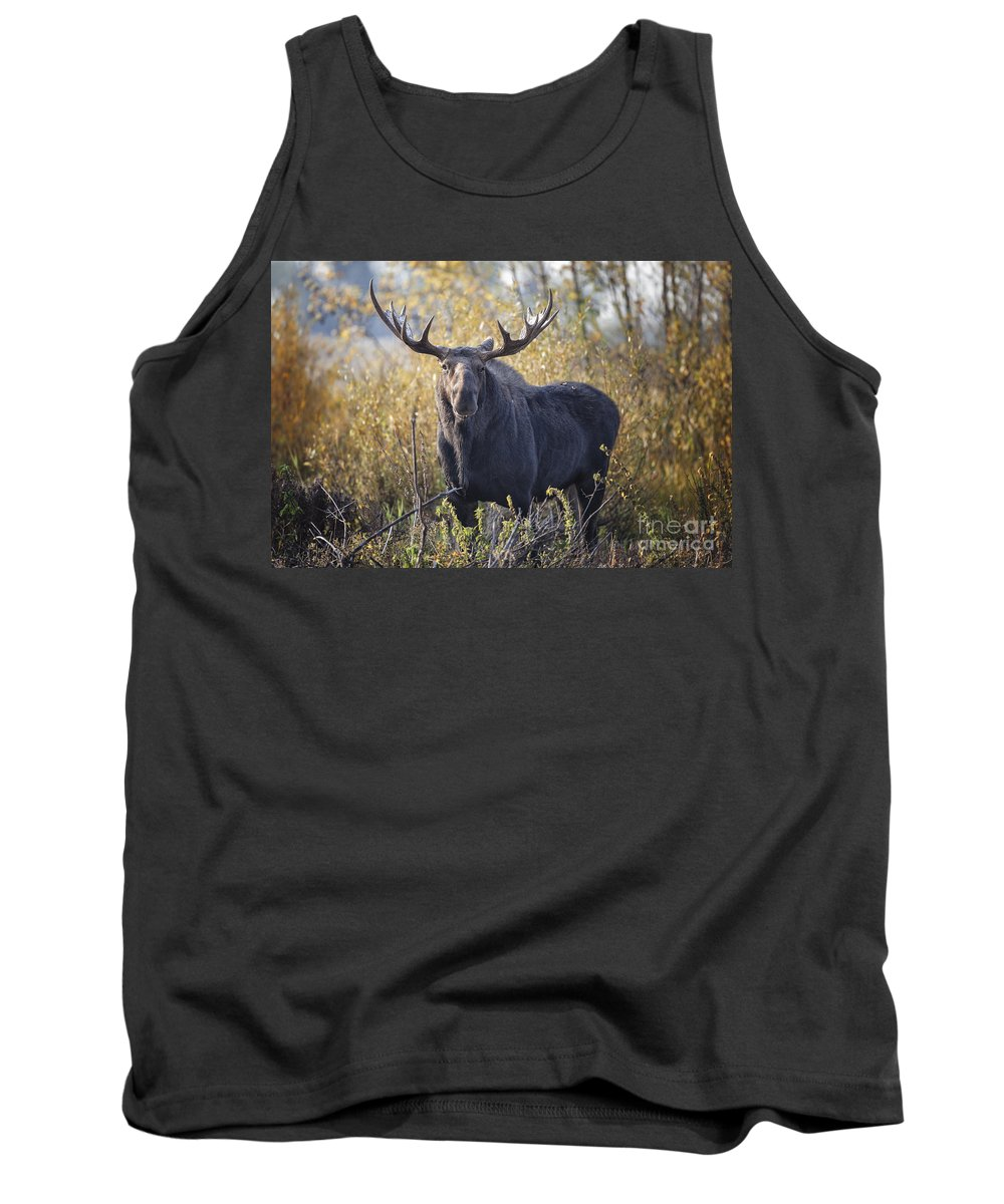 Bull Moose Tank Top featuring the photograph Bull Moose by Ronald Lutz