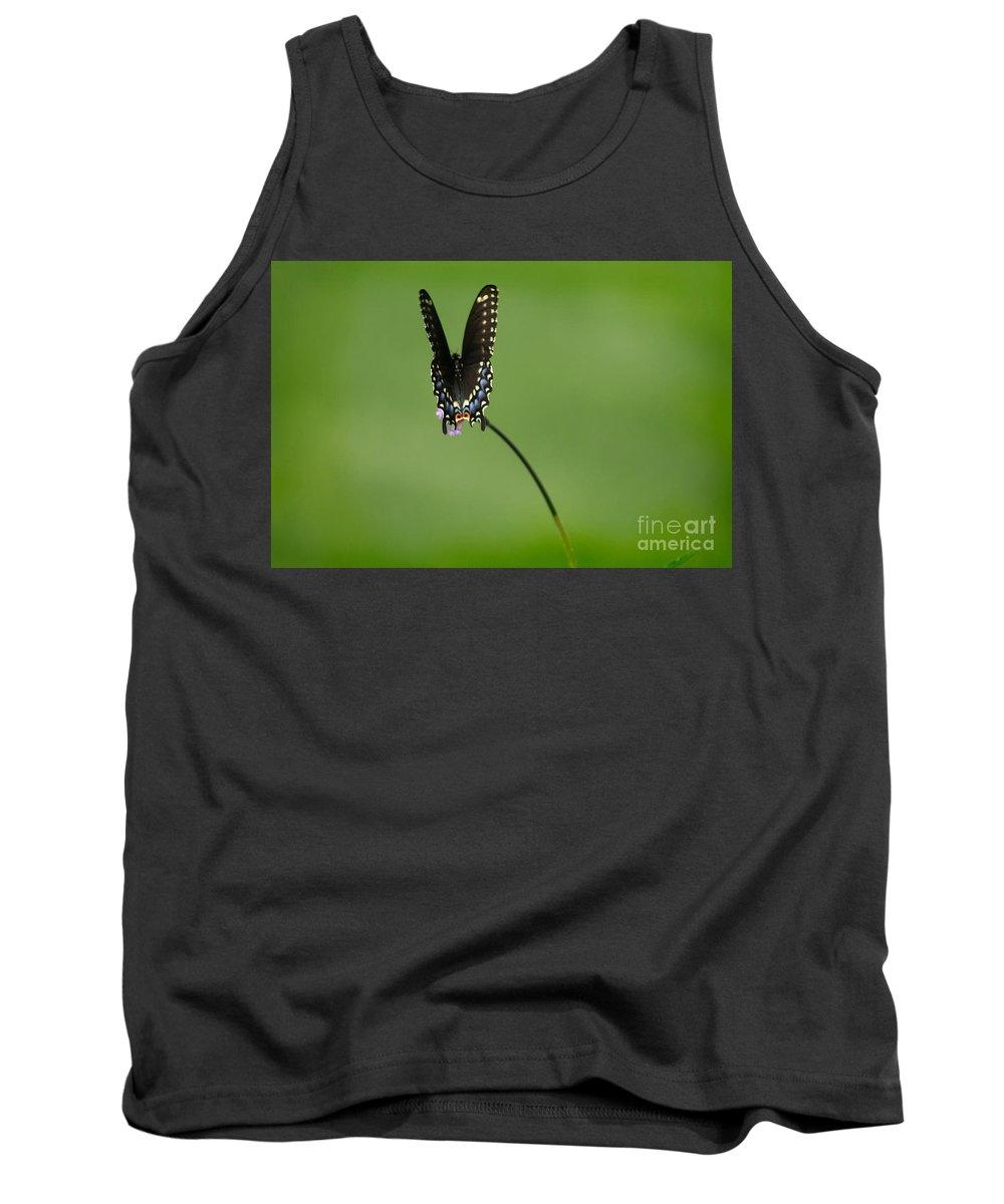 Butterfly Tank Top featuring the photograph Black Swallowtail Butterfly by Karen Adams