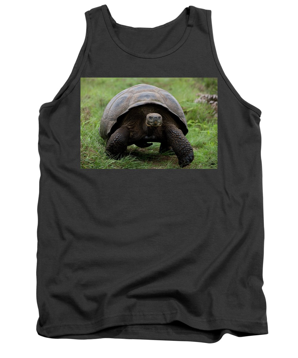 Animal Tank Top featuring the photograph A Giant Tortoise Walks Along The Rim by Eric Rorer