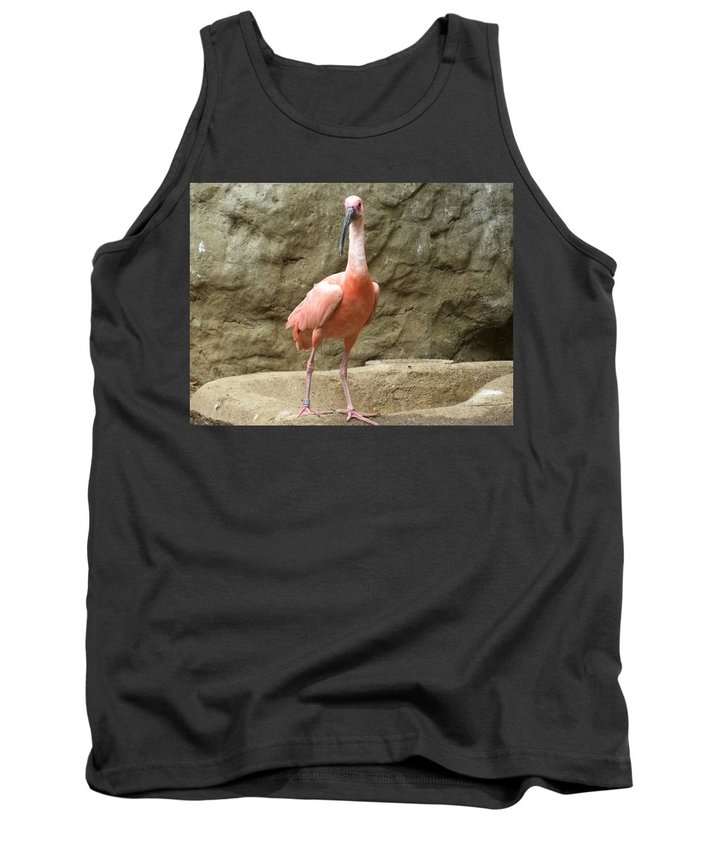 Bird Tank Top featuring the photograph A Scarlet Ibis Stands Perched On A Rock by Jessica Foster