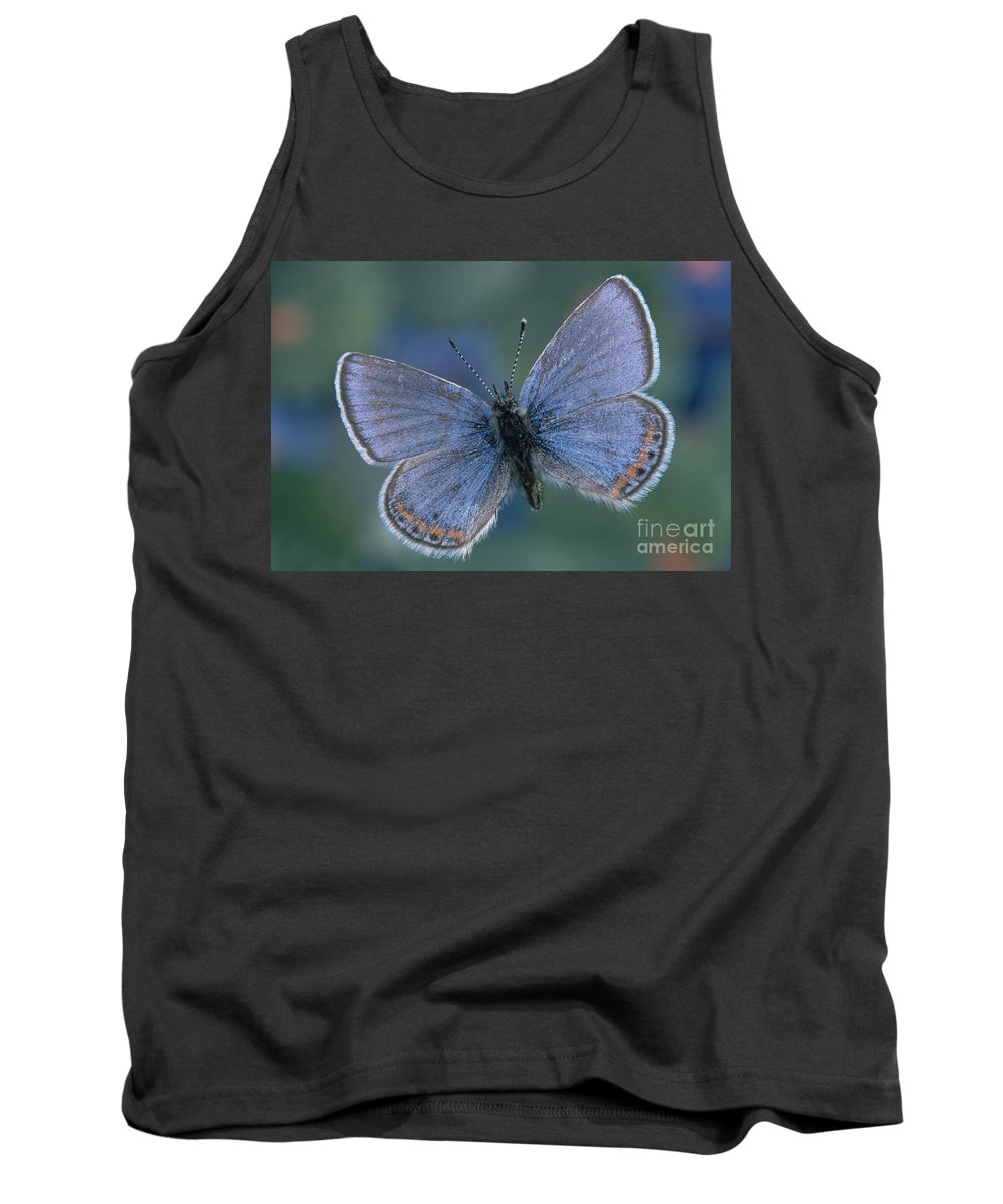 Fauna Tank Top featuring the photograph Acmon Blue Butterfly Plebejus Acmon by Kjell B Sandved